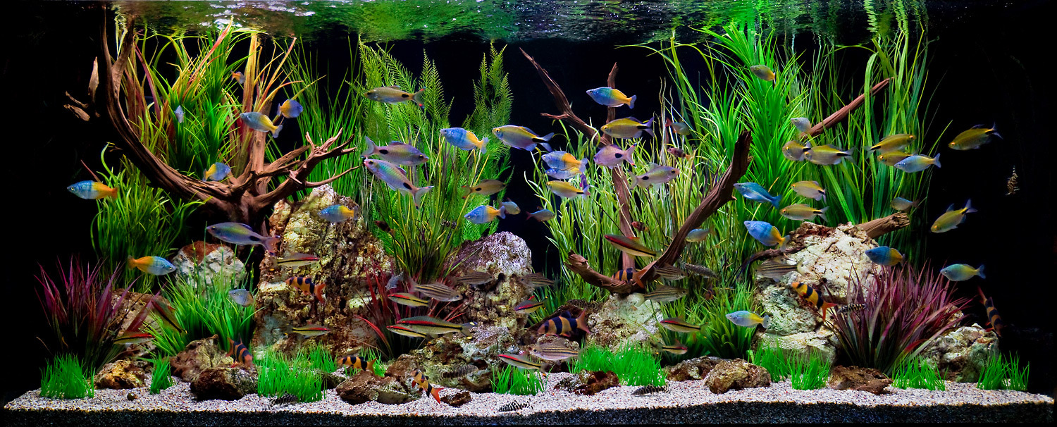 Freshwater congressional aquarium for Aquarium fish for pond
