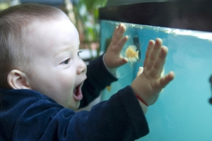 kid-and-fish-tank